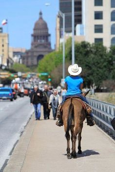 Austin, TX — Rent a horse to ride around downtown! TexasGotItRight.com I've been there, but haven't done that!!