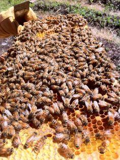 bees http://njpest.com/bee-control-nj.htm