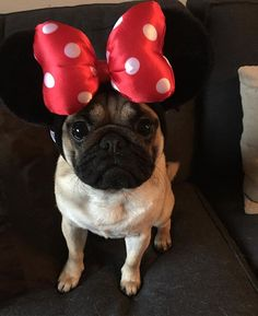 Does this bow make my head look big?