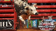Professional Bull Riders - Breaking down the World Champion Bull contenders. By: Justin Felisko October 16, 2015.  Jared Allen's Air Time is one of seven World Champion Bull contenders. PUEBLO, Colo. – In one week the top bulls in the PBR will be amidst their final quest toward the ultimate goal of claiming the 2015 World Champion Bull title.