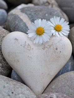 """""""daisy a day """" """" Heart In Nature, Heart Art, Image Zen, Sunflowers And Daisies, Yellow Flowers, Daisy Love, I Love Heart, Heart Images, Perfect World"""