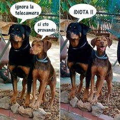 Ah ah ah ah non resistono mai i cani