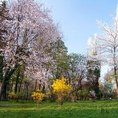 In love with this spring.  #InvisiblePlaces  _____________________________  #spring #nature #born #trees #flowers #bloom #naturelovers #Bucharest #travel #world #miracles #abundance #prosperity #magic