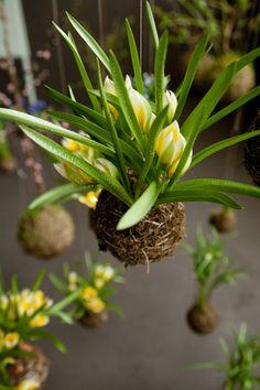 string garden- air plants!