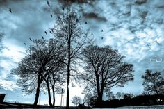 The birds by Khalid_Fineza  Details