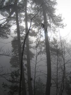 Nebel im Pfälzer Wald. Der Winter steht vor der Tür.