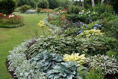 Beautiful border at Cedarholm Garden Bay Inn (Camden, Maine) - mixed hostas, lambs ears as edging, lilies and more