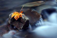 Photo by Ondrej Pakan