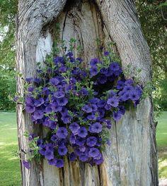 """@miwakunogaadeni: 妖精がいそうならRT "" a purple themed week of prettiness :)  #EpilepsyAwareness @BolshieBear @TheLastZHN"