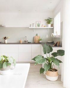 75 Small Apartment Kitchen Decorating Ideas - home/interior: accessoiries and things. - home decor Minimal Kitchen, New Kitchen, Minimalistic Kitchen, Kitchen Ideas, Cozy Kitchen, Kitchen White, Kitchen Layout, Kitchen Small, Green Kitchen
