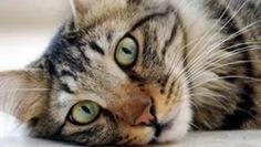 kedi: Yandex.Görsel'de 27 bin görsel bulundu