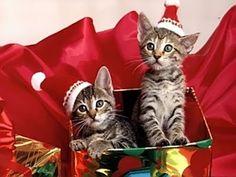 Cartolina buone feste con gattini