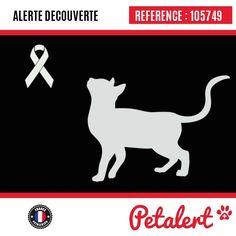 02.04.2017 / Chat / Toulouse / Haute-Garonne / France