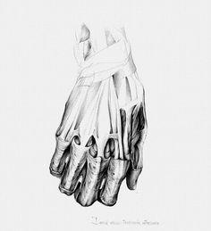 Anatomy sketch of hand