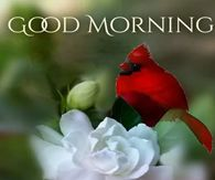 Good Morning Pictures, Photos, and Images for Facebook, Tumblr, Pinterest, and Twitter Thank You Pictures, Quote Pictures, Today Pictures, Time Pictures, Coffee Pictures, Morning Pictures, Picture Quotes, Good Morning Sun, Good Morning Flowers Gif