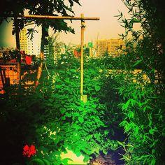 """Taipei, rooftop garden, iphone 4s + pixlromatic"""