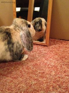 Oh my, who is that beautiful bunny looking back at me? - February 8, 2014