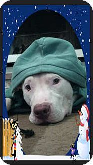 LOOK AT THIS ANGEL..My name is Athena!..same as mine..PLZ HELP.http://www.adoptapet.com/pet/9823721-largo-florida-american-bulldog-mix …