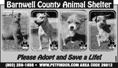 Barnwell County Animal Shelter ad for October 9, 2013 | Barnwell, SC | The People-Sentinel