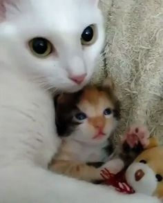 Proud mother and her kitten  - GIF on Imgur