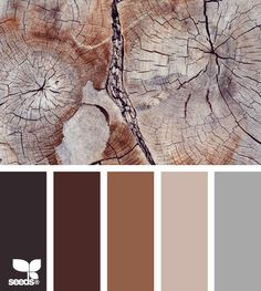 Color palette, chopped wood tree grain. rich, deep brown color scheme.