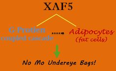 Bags Be Gone! Erase Those Under Eye Bags With XAF5 - Beauty Black Book