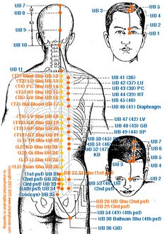 (UB) Urinary Bladder Meridian - Graphic | Yin Yang House
