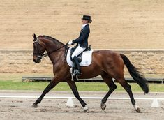 Advice for dressage training in the classical system