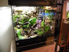 How to Build a Dart Frog Viv (round 2) - Page 6 - Reptile Forums
