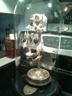 Beauchene monkey skull Created by Eric M.