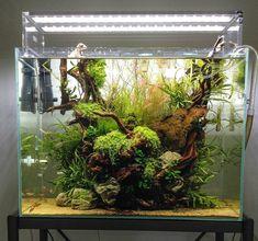 Aquascape (@aquascapenl) в Instagram: «Very cool and colorful scape ------------------------------------------------ #aquascape #aquarium…»