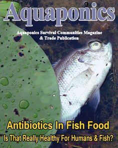 1000 images about asc magazine covers on pinterest for Fish antibiotics for humans