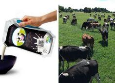 Ils prennent leur destin en main : ces agriculteurs lancent leur marque de lait. Et ça marche !