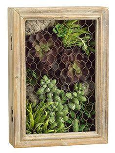 Echeveria/Aloe/Sedum Succulent Arrangement in Wood Mesh Box
