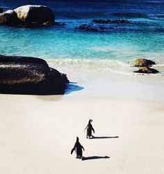 Penguins on the beach - #CapeTown - #SouthAfrica  #livefree #traveltheworld #letsgoeverywhere  #instatravel #romanticplaces#lifewelltravelled  #weliketotravel #travelnoire #wanderlust #passionpassport  #officialtravelpage