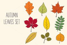 Check out Autumn Leaves Set by Paper Cards on Creative Market