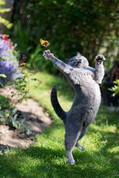 butterfly catcher Amazing World beautiful amazing