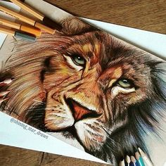 Imagem de art, drawing, and lion
