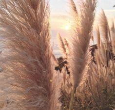 rumineely: (in Big Sur, Kalifornien) - life style - Fotografie Peach Aesthetic, Brown Aesthetic, Summer Aesthetic, Aesthetic Girl, Cute Backgrounds Tumblr, Big Sur California, Aesthetic Backgrounds, Nature Photography, Photography Lighting
