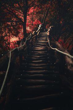 The dark path by Hanson Mao on 500px