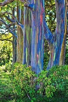 Found on Maui: Makawao, Olinda Rd., Ke'anae Arboretum 16.5 Mile Marker, Hana Hwy Maui Island, HI 96708