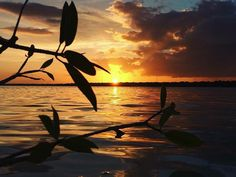 """""""Un Rato"""" By @mtr_98  Bacalar Quintana Roo Mexico - #sunset #clouds #colors #orange #gold #sky #lifeisgood #lagoon #bacalar #nature #quiet #silence #relax #incredible #love #life #passion #goals2017 #bestplaces2017 #traveler #outside #getaway #bucketlist #plants #nofilter #qool #quintanaroo #qoolmx"""