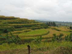 Discover a different side to Bali with your Bali private driver