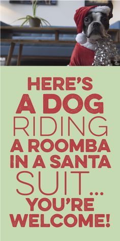 Here's A Dog Riding A Roomba In A Santa Suite. You're Welcome!