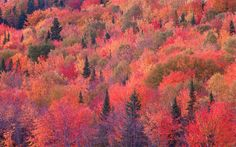 Let's bring Autumn back!!! Tag the one who would love this riot of colors!   #camping #camp #outdoors #hiking #fire #tent #woods #nature #naturephotography #explore #backpack #forest #wilderness #adventure #snow #cabin #woods #hike #mountains #trekking #trail #mountain #travel #walk #landscape #alps #autumn #red #october #colors