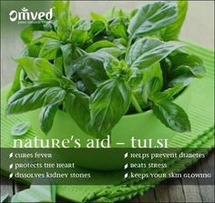 Nature's Aid - Tulsi  - Cures fever - Protects the heart - Dissolves kidney stones - Helps prevent diabetes - Beats stress - Keeps your skin glowing  Be Balanced. Be Natural. Be You. - www.Omved.com
