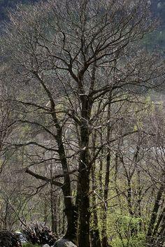https://flic.kr/p/Je9hd7 | Valle di Maggia, Ticino, Svizzera