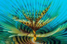 Spiral του Marco Gargiulo (Ιταλία). Η Sabella spallanzanii είναι ένα είδος θαλάσσιου σκουληκιού (πολυχαίτης), το οποίο εκκρίνει βλέννα σχηματίζοντας έναν σκληρό, αμμώδη σωλήνα που προεξέχει από την άμμο.
