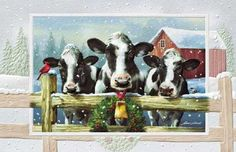 Cow Christmas. Merry Christmas from the Bremers!