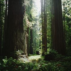 Landscape Photos, Landscape Photography, Nature Photography, Hiking Photography, State Parks, Beautiful Places, Beautiful Pictures, Amazing Places, Nature Sauvage